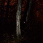 Bloody_forest_momokuchi